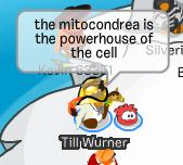 mitocondrea